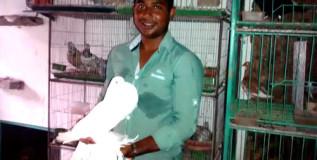 ইঞ্জিনিয়ারিং পাশ করে কবুতরপ্রেমী নবীগঞ্জের আব্দুস সামাদ এখন সফল ব্যবসায়ী