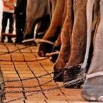 elephant-topper